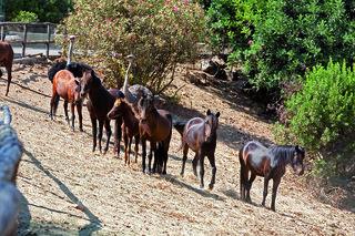 Hotel Arbatax Park Resort - Borgo Cala Moresca Tiere