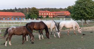 Hotel Alter Landsitz Tiere